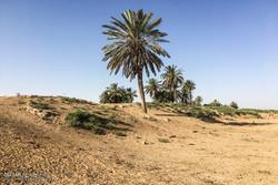 وزارت کشاورزی تسهیلات ویژهای به کشاورزان خوزستانی پرداخت کند