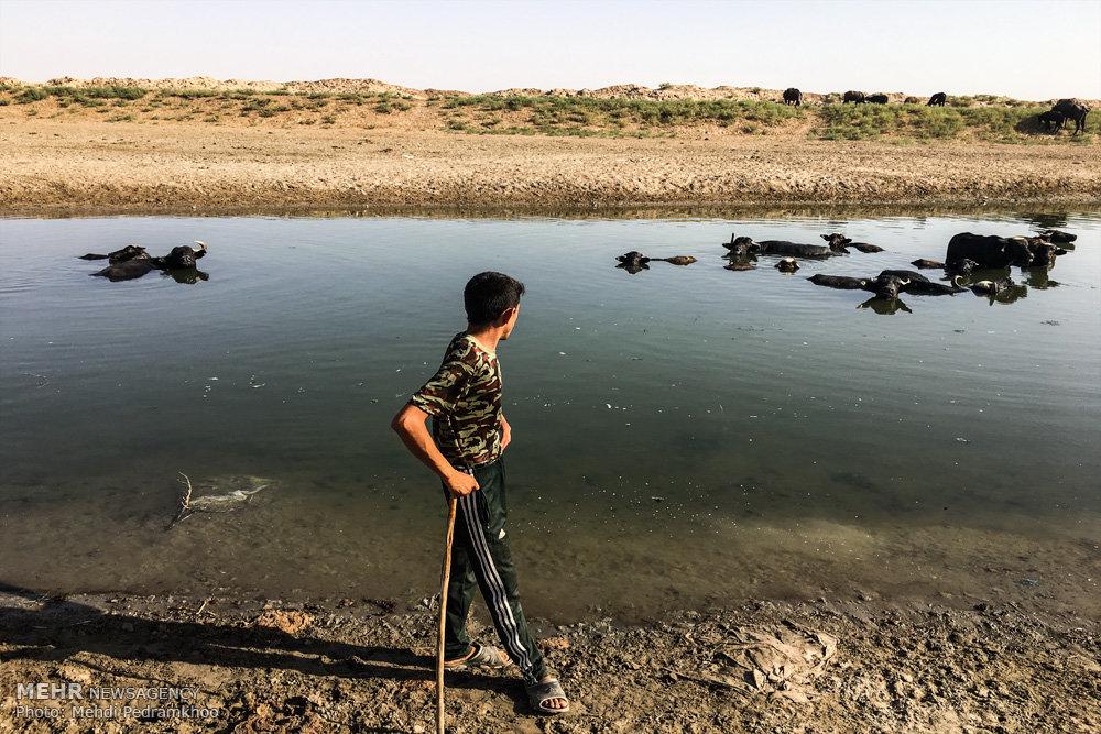 آغاز رهاسازی آب از سد کرخه/ زندگی حیوانات در خطر جدی است