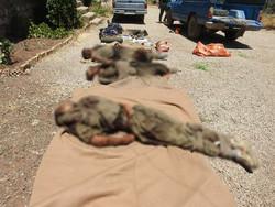 اولین تصاویر اجساد تروریستهای معدوم در درگیری رزمندگان قرارگاه نجف نیروی زمینی سپاه با تروریست ها در منطقه مرزی نودوشه