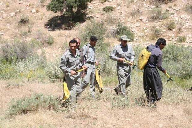 رفع آلایندگی مراتع منطقه کوگان و کدر در شهرستان پلدختر