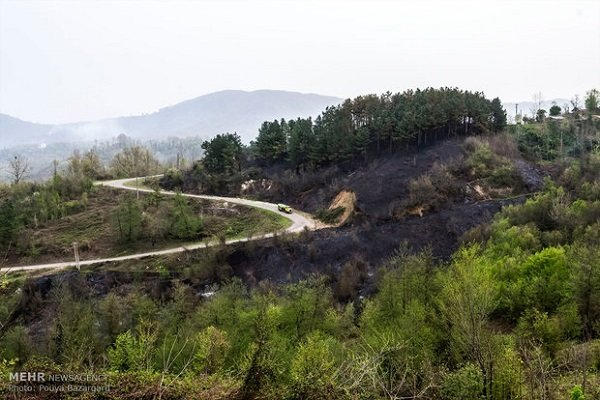 Iran, FAO have joint plan on protecting forests