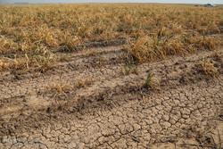 راهی جز کاهش برداشت از منابع زیرزمینی آب نداریم