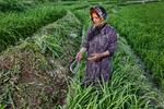 İran'ın Karadeniz'e benzer kuzey bölgesinde yaşayan kadınlar