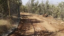 راهسازی در جوار زیستگاه گوزن زرد ایرانی/ صدها اصله درخت قطع شد