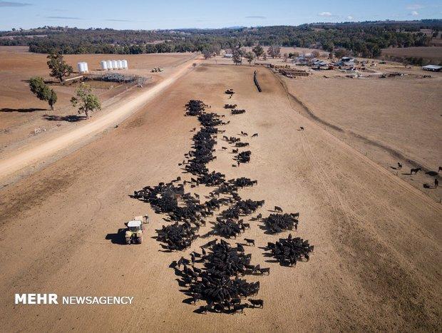 خشکسالی در استرالیا