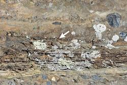 محققان میکروب ۳.۲۲ میلیارد ساله کشف کردند