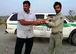 شهادت محیط بان «مهدی احمدینیک» در قلعه گنج