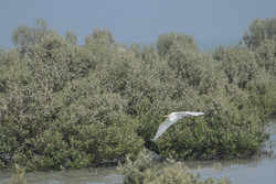 غابة حرا الجميلة في جزيرة قشم