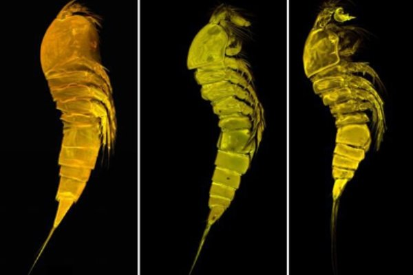 سه گونه جدید جانوری در خلیج فارس و دریای عمان کشف شد