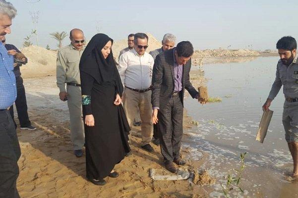 کاشت درختان مانگرو در سواحل استان بوشهر توسعه مییابد