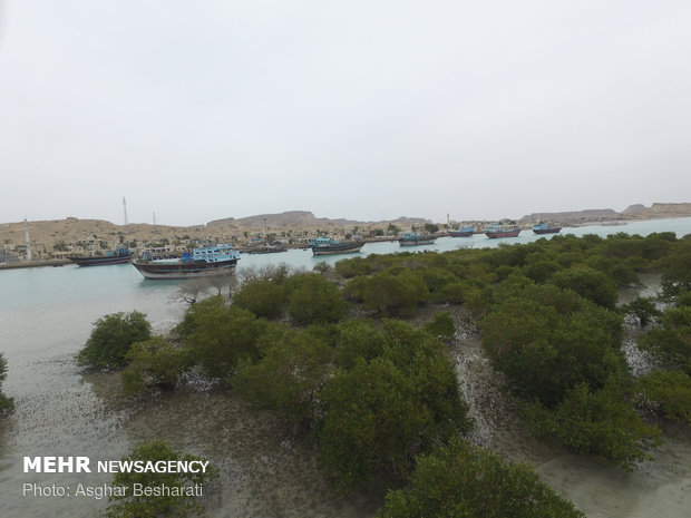 Breathtaking views of 'Qeshm mangrove forest' at a glance