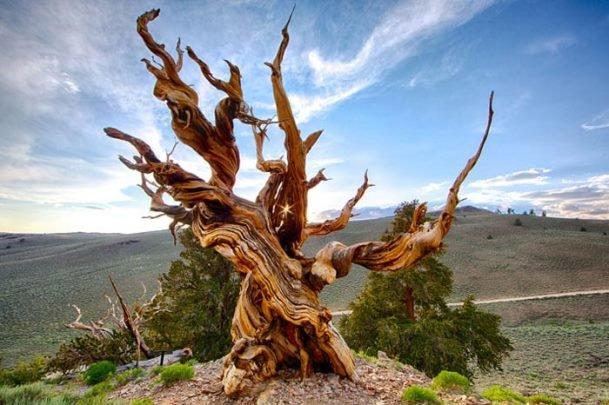 إيران تتمكن من صناعة أجهزة لكشف مدى تهالك الأشجار لمنع وقوع خسائر بشرية ومادية