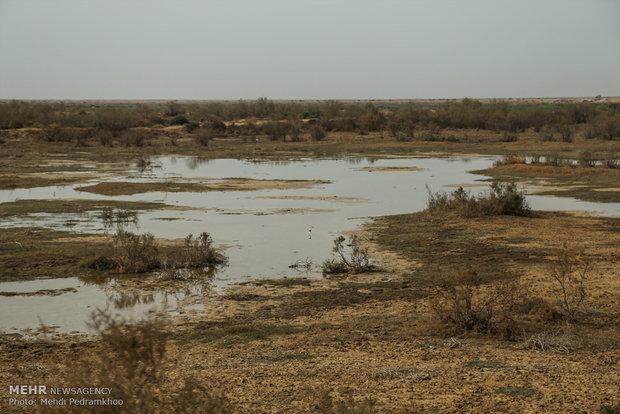 أهوار خوزستان