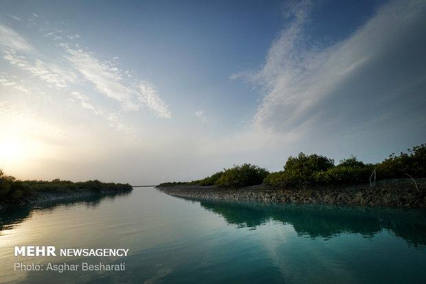 تجربیات موفق حفاظت از اکوسیستمهای مانگرو در بوشهر استفاده شود