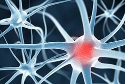 درمان سکته با سلول بنیادی