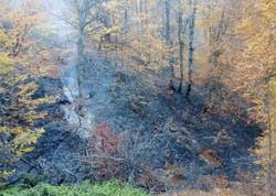 آتش سوزی عمدی پارک ملی تندوره مهار شد