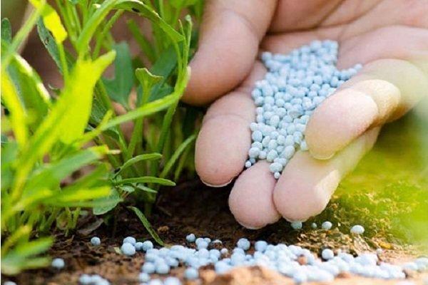 ایدههای مبتنی بر فناوری در بخش کشاورزی حمایت میشوند
