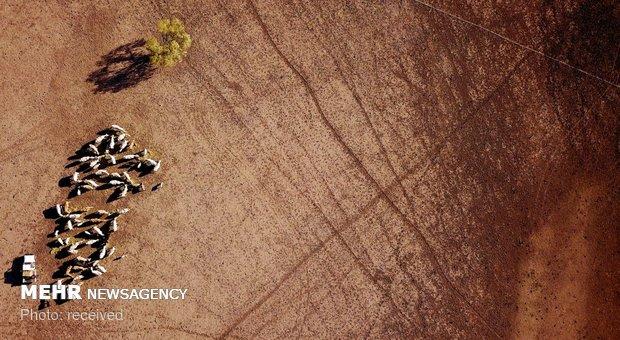 تصاویر هوایی از خشکسالی در استرالیا