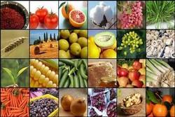 خرید توافقی ۹۳ هزار تن انواع محصول از کشاورزان استان همدان