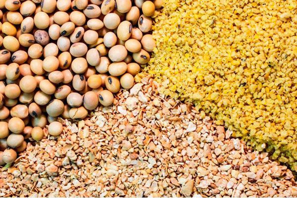 شرکتهایی بدون مجوز جهاد کشاورزی نهادههای دامی را در بازار سیاه توزیع کردند