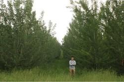 کنترل ژنتیک درختان