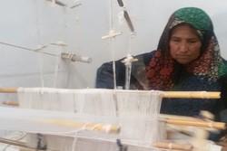سهم زنان در اشتغال بخش کشاورزی ١١ درصد است
