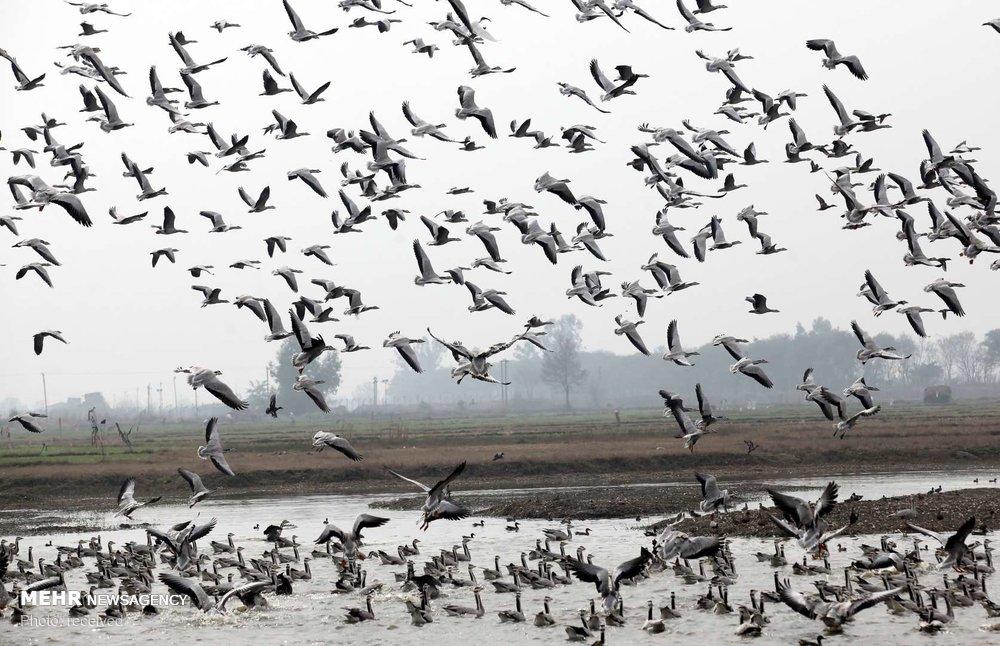 مهاجرت فصلی حیات وحش