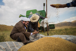 Farmers paying zakat while harvesting wheat