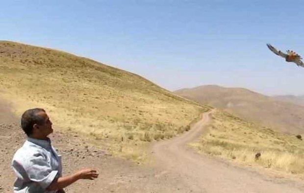 رهاسازی چهار دلیجه تیمار شده در طبیعت استان قزوین