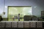 وقتی تخم مرغ «طاقچه بالا» میگذارد/ کاهش قیمت ارز تورم را کنترل نکرد