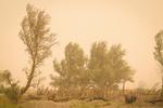 وزش بادهای شدید در شمال سیستان و بلوچستان ادامه دارد