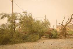 ۳۶روستا در محاصره شن های روان/ طوفان شن در شرق کرمان تشدید می شود