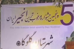 پنجمین جشنواره مرغوبترین انجیر ایران برپا شد