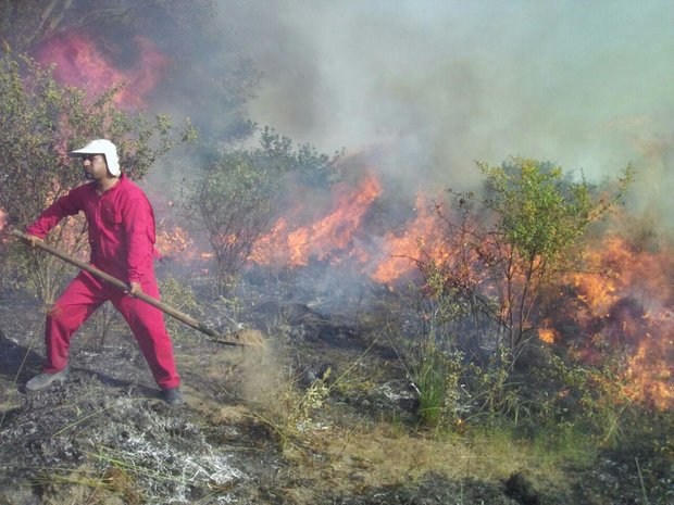330 ha of Miankaleh peninsula turns into ashes