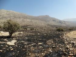 آتشسوزی منطقه حفاظتشده بیستون به طور کامل اطفا شد