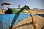 ۸۷ درصد بهای گندم خریداری شده از کشاورزان پرداخت شده است