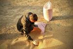 گندم درجه سه ترانزیتی را با گندم درجه یک ایرانی جابجا میکنند