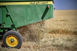 سالانه ۲۰۰ هزار تن گندم در شهرستان خدابنده تولید میشود