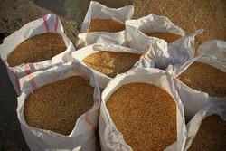 تولیدیهای آرد یزد برای تامین آرد با سبوس استاندارد اقدام کنند