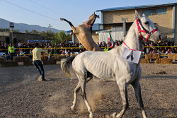 Shahroud hosts 3rd Horse Beauty Festival