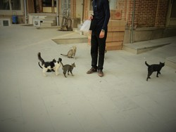 گربههای تبریز