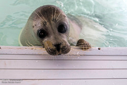 ships to carry message of preserving Caspian seals