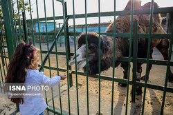 Iranian zoos to be monitored online  across the country