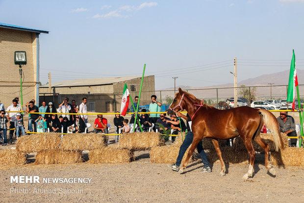 Shahroud hosts 3rd Horse Beauty Festival