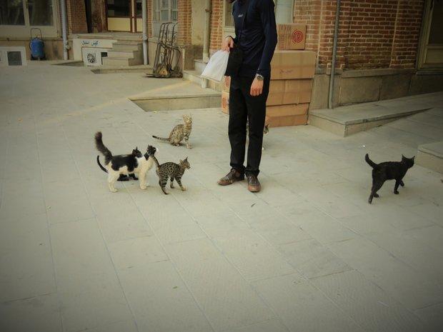 اینجا گربهها محترم هستند