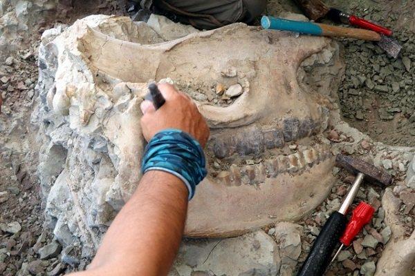 Kanada'da 23 milyon yıllık fosil bulundu