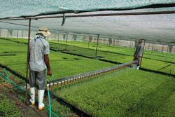 شرایط پرداخت تسهیلات توسعه گلخانهها تسهیل شود