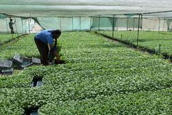 اعطا کد ۱۸ رقمی کاهش بقایای سموم محصولات کشاورزی به مزارع تهران