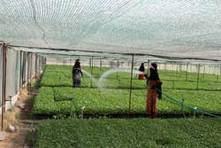 استان تهران چند برابر میانگین کشوری محصول کشاورزی تولید می کند