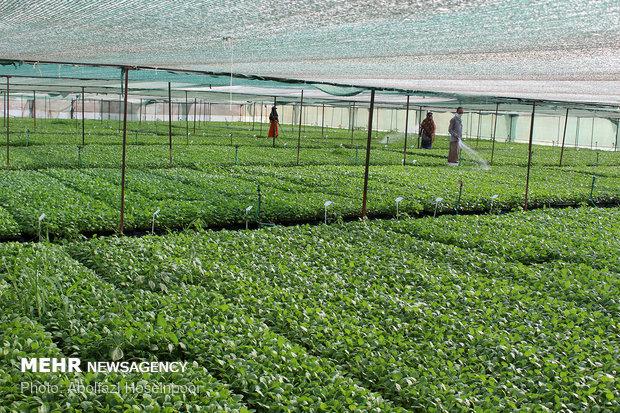 مجلس شرایط واردات محصولات کشاورزی و دامی را تعیین تکلیف کرد